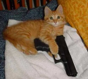 crazy cat with gun (9)